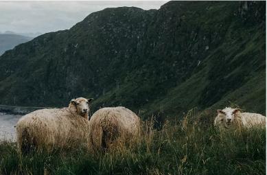 HAZZYS|羊毛的柔软,予你温暖拥抱